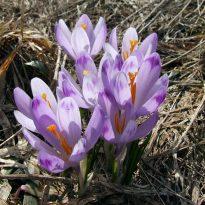 Eltham to bloom next spring