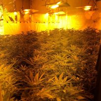 Woolwich cannabis factory dismantled