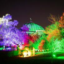 Enchanting Christmas trail lights up Avery Hill Park