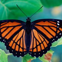 Bexley Butterfly House Saved from closure